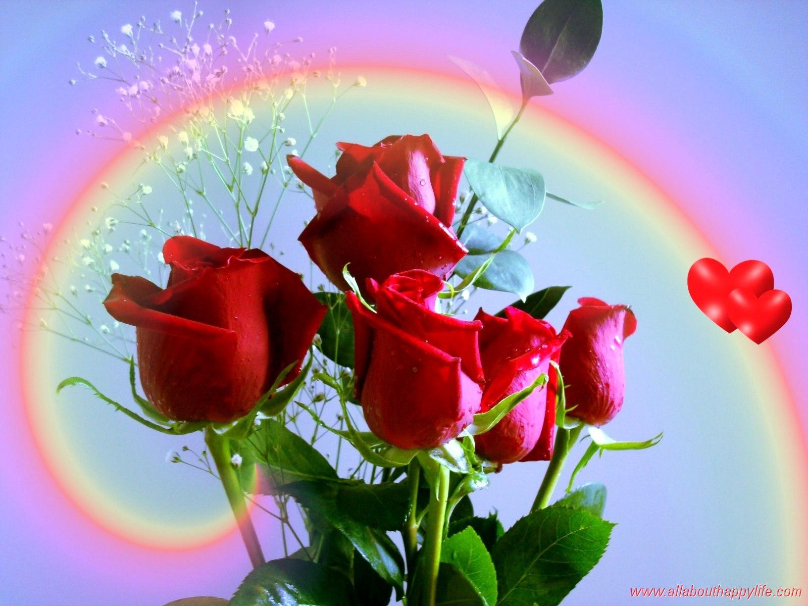 rose red love wallpaper