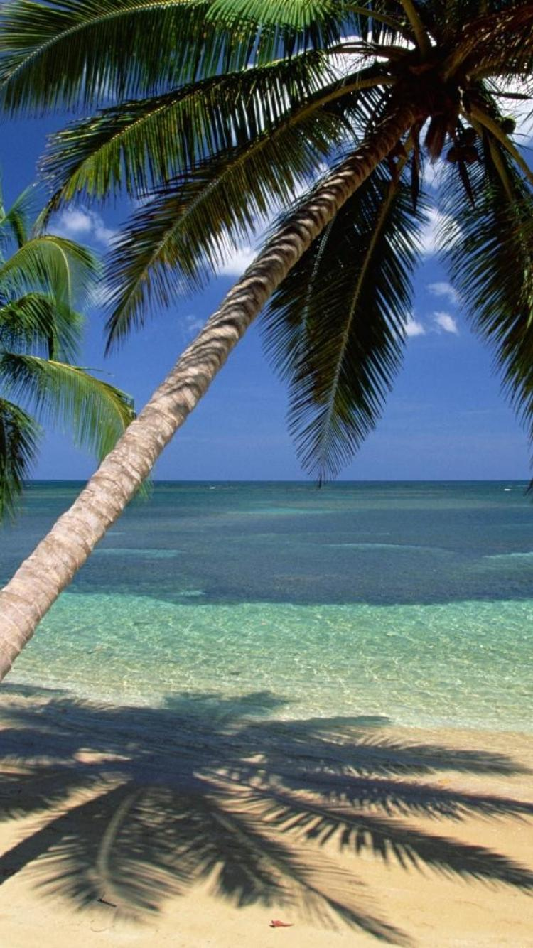 coconut palm trees seascapes dominican republic wallpaper 16261 750x1334