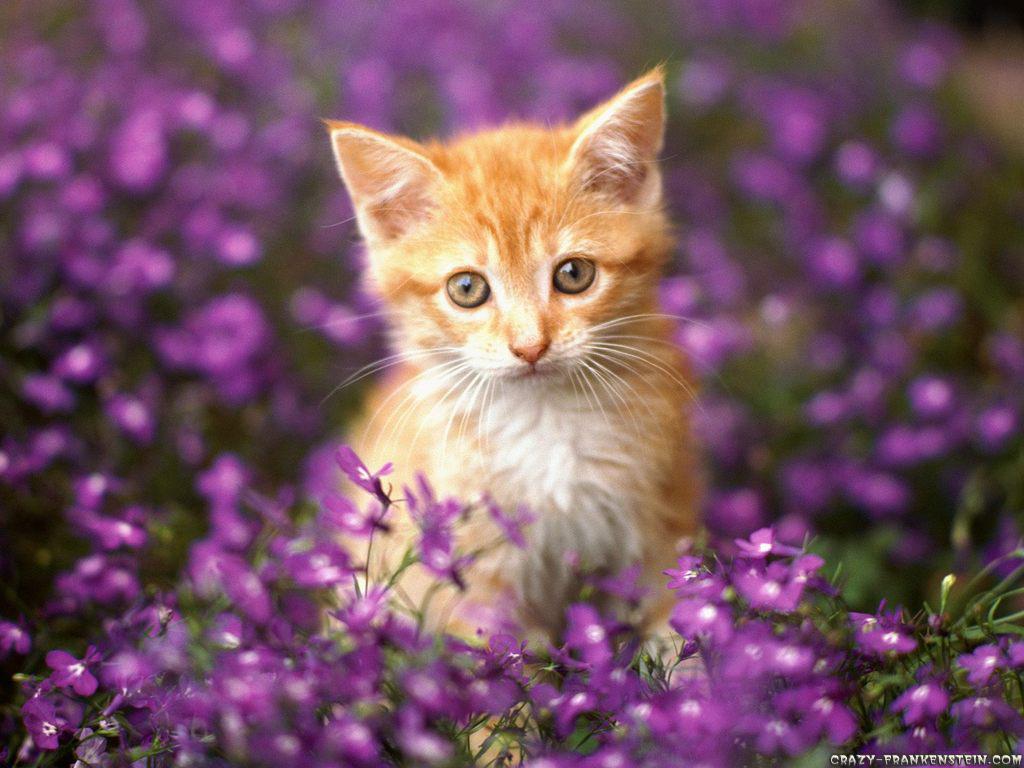 Free Wallpaper Of Kittens Wallpapersafari