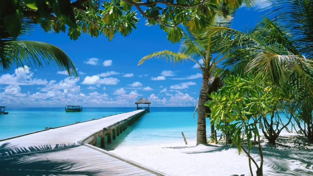 Download Beach Palm Trees HD Wallpaper Wide Desktop Nature Beaches 1024x576
