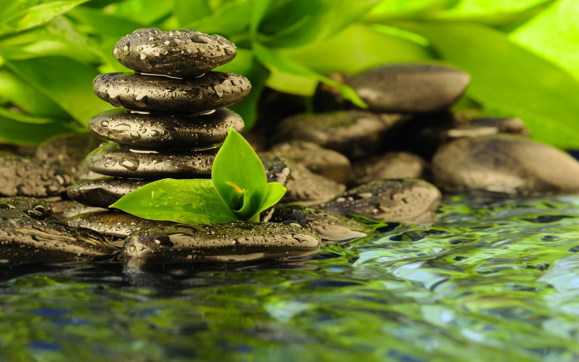 zen religion peace solitude water reflection rocks drops leaves 1920x1200