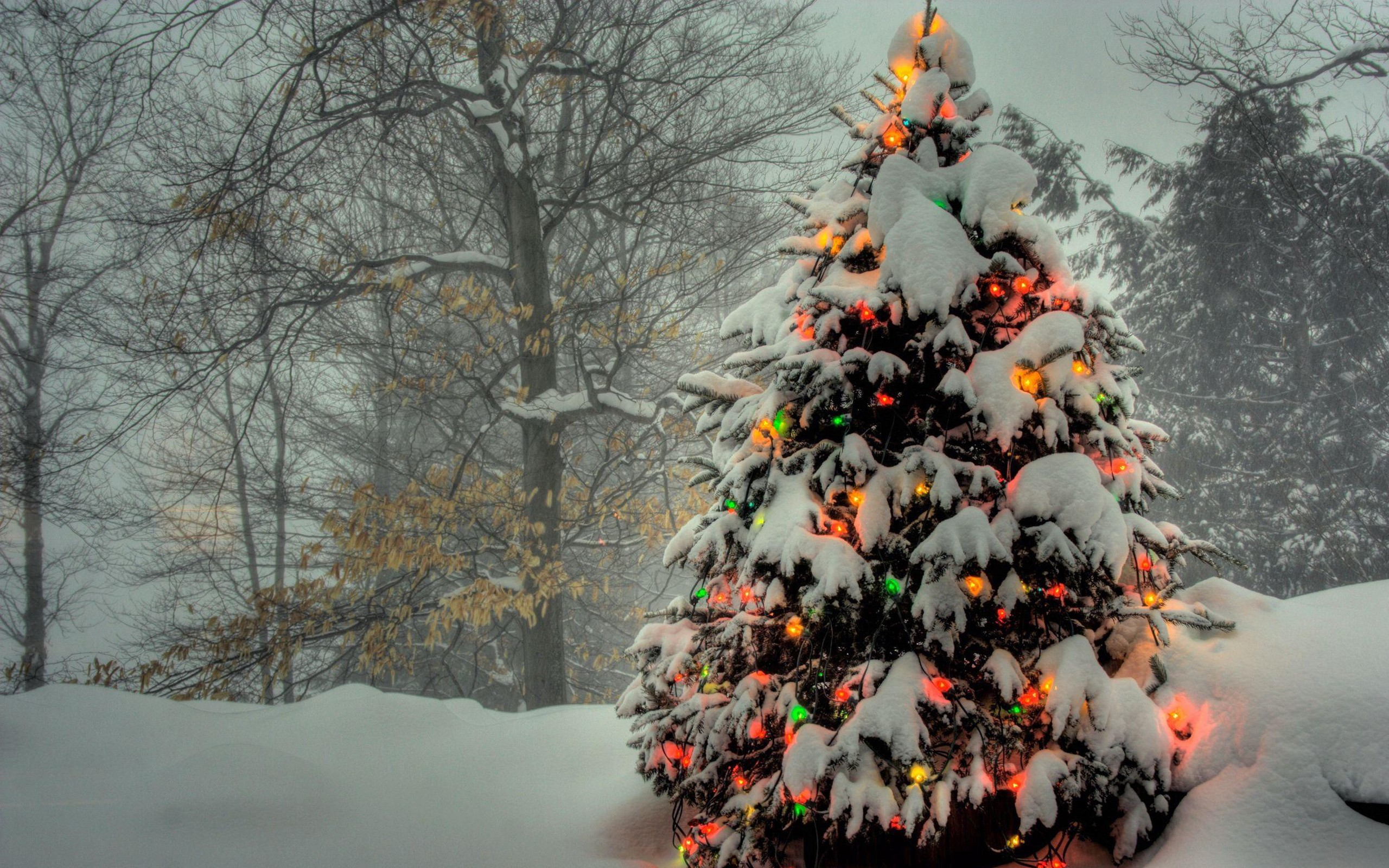 Christmas Tree 1080p Holidays Wallpapers   New HD Wallpapers 2560x1600