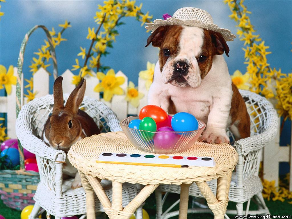 Iphone wallpaper easter - Party Animals Wallpaper Wallpapersafari