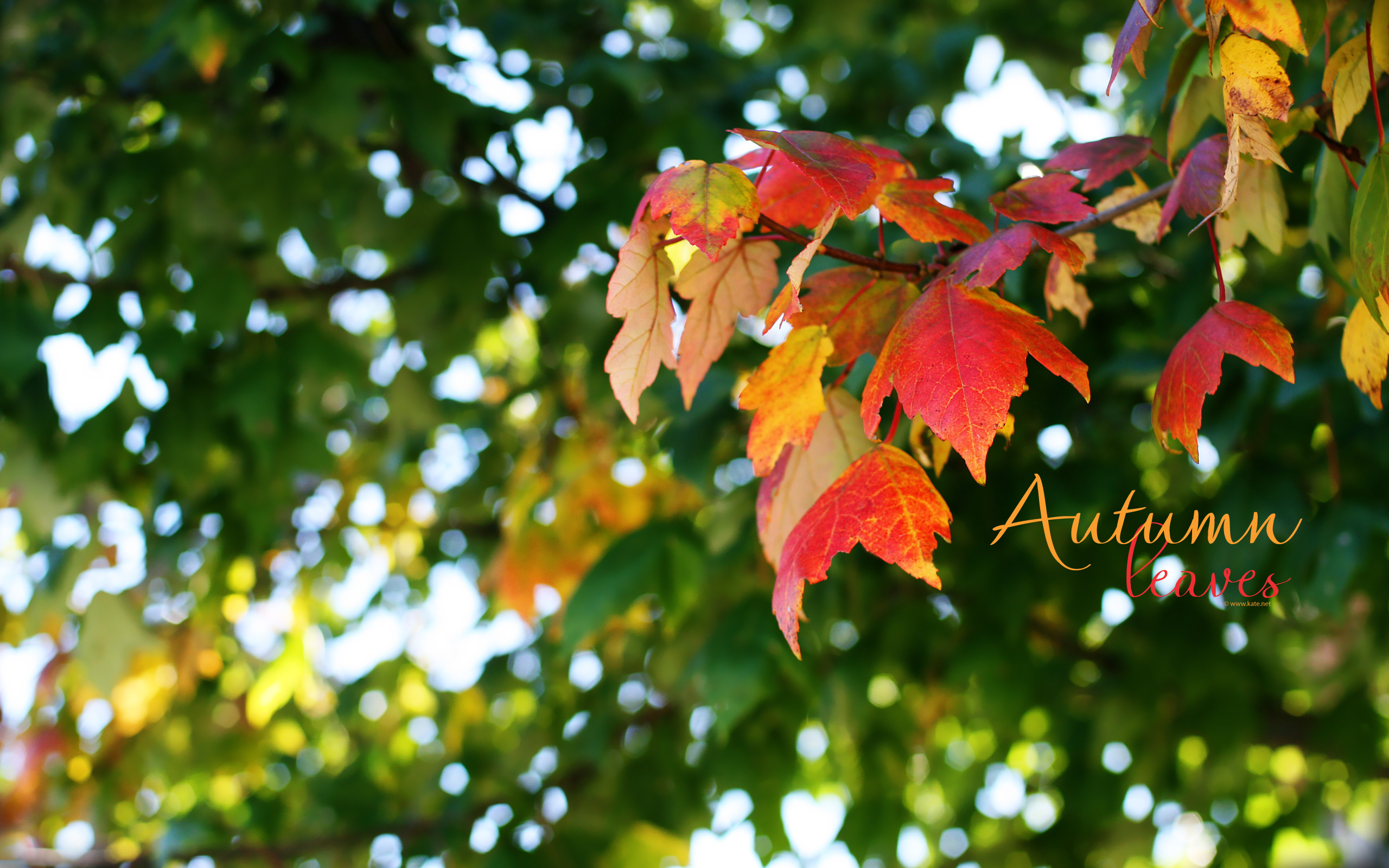 leaves wallpaper winner of the you make the call vote photo wallpaper 2560x1600