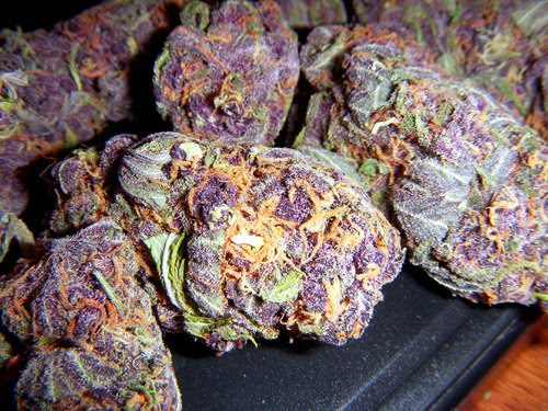 the cyphe Purple Weed Purple Drank Purple Heart Sargeant 500x375