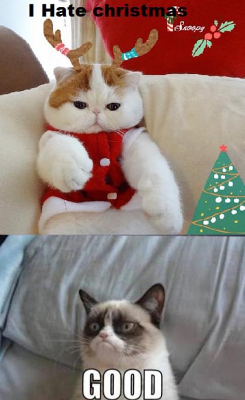 Grumpy Cat Christmas Cake Ideas and Designs 500x815