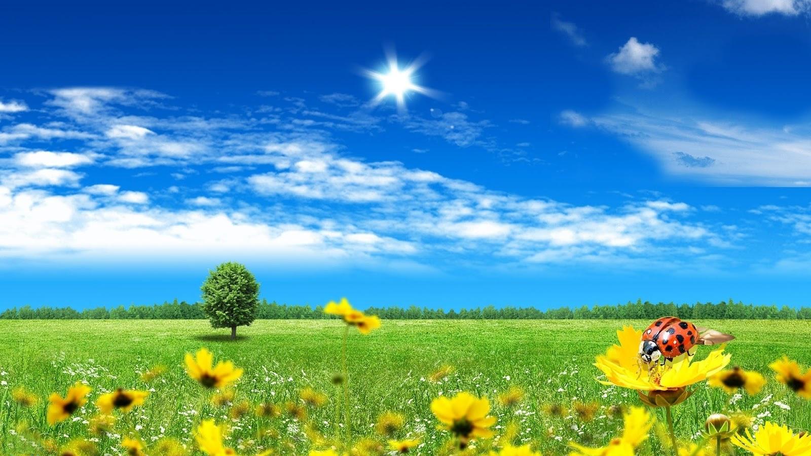 Backgrounds Spring Wallpapers Top Best HD Wallpapers for Desktop 1600x900