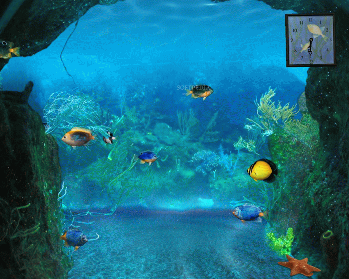 wallpaper fish wallpaper animated wallpaper wallpaper fish aquarium 700x560