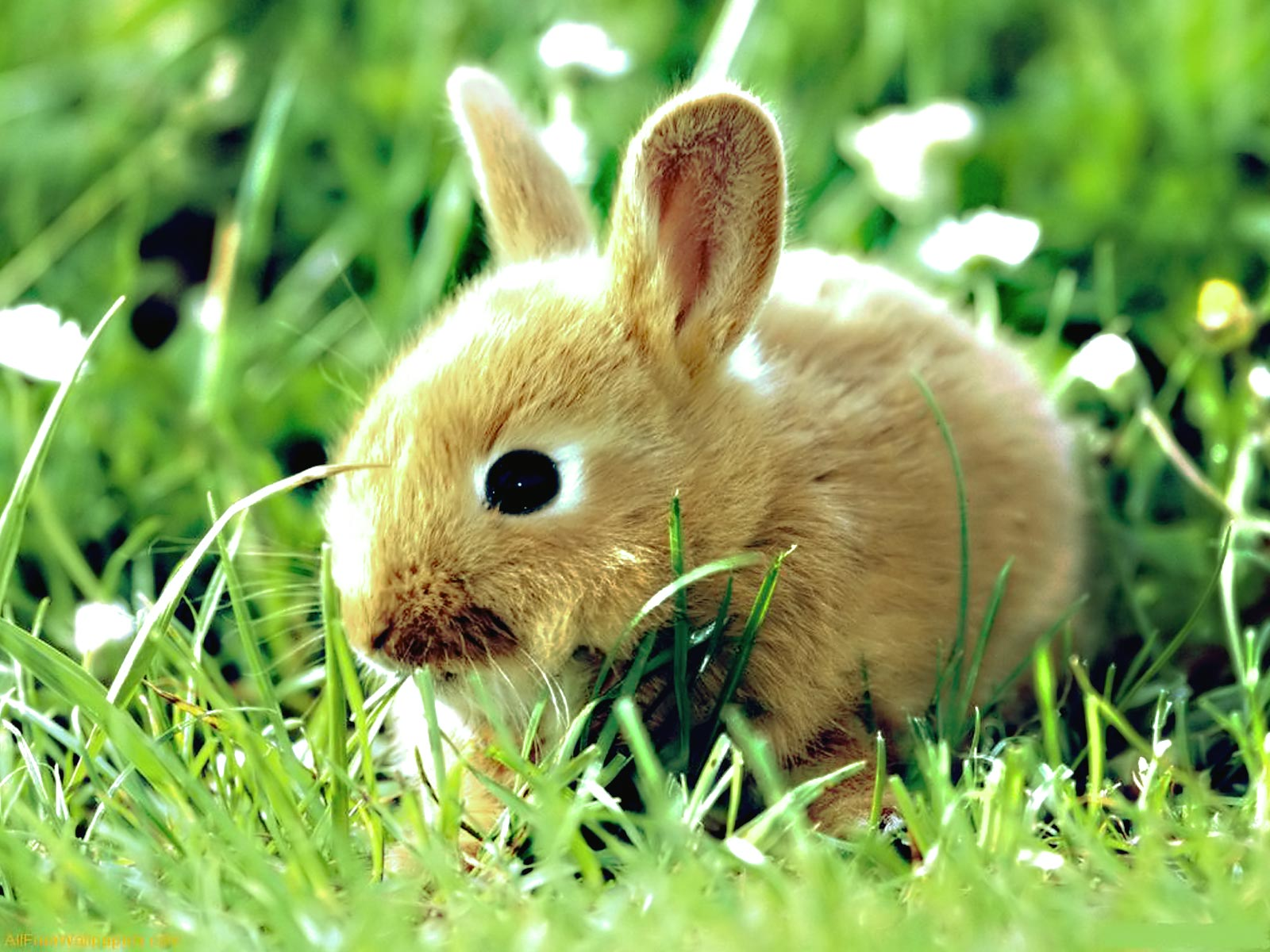 Spring Animal   Wallpaper High Definition High Quality Widescreen 1600x1200