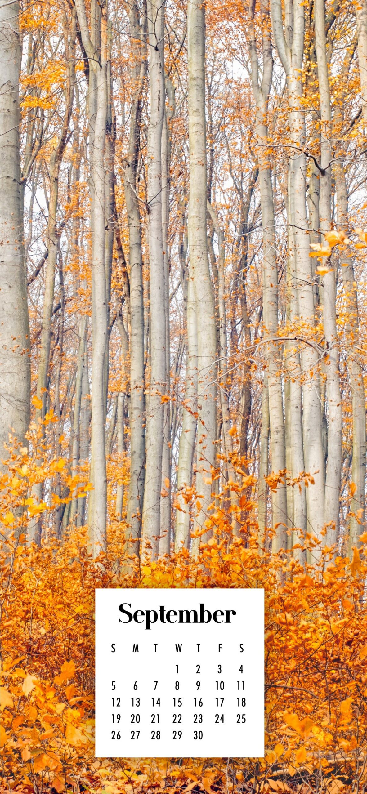 September Calendar Wallpaper   38 Best Desktop Phone Backgrounds 1183x2560
