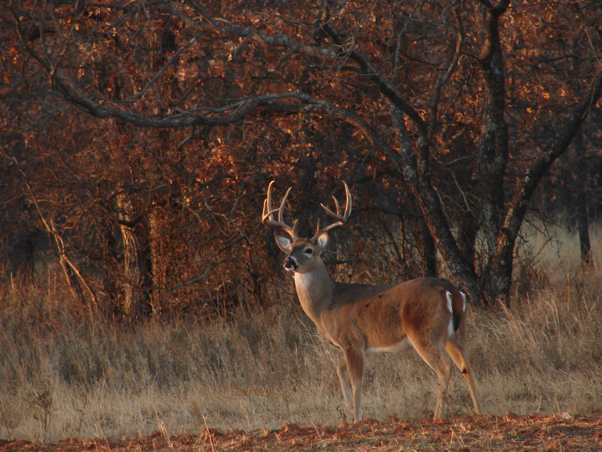 Whitetail Deer Hunting Forums Thread Cool Pics Age And 2048x1536
