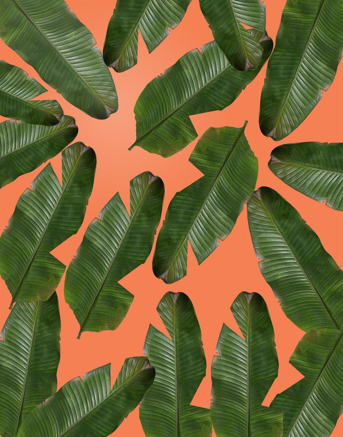 Banana Leaf Wallpaper Pattern Banana leaf print for sale 1100x1400