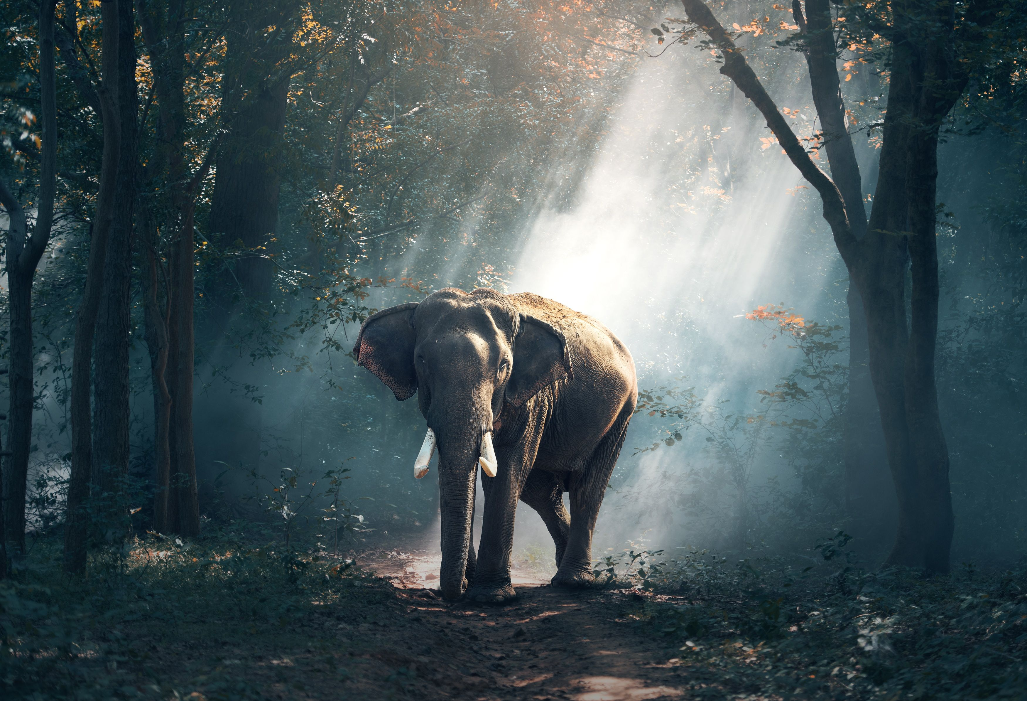 35 Elephant Wallpapers   Download at WallpaperBro 3500x2388