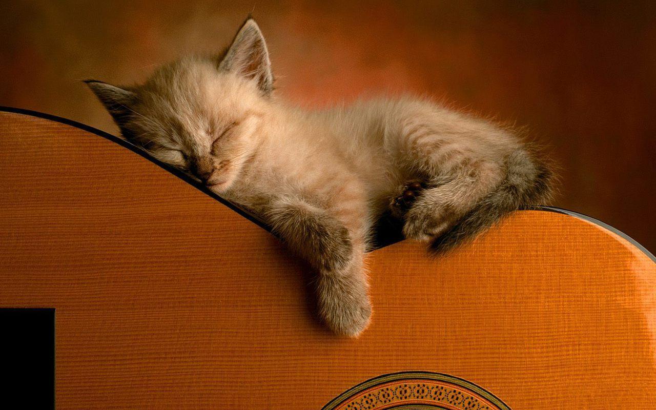 Cute Kitten Wallpaper - Kittens Wallpaper (16094679) - Fanpop