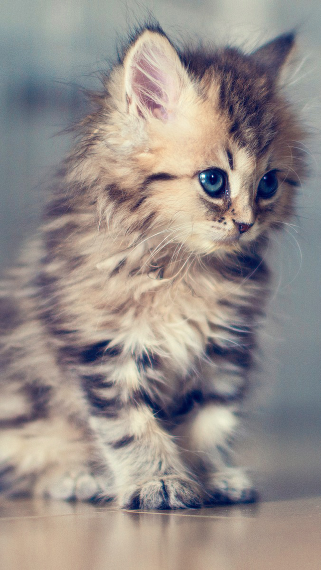 Adorable Kitten Wallpaper