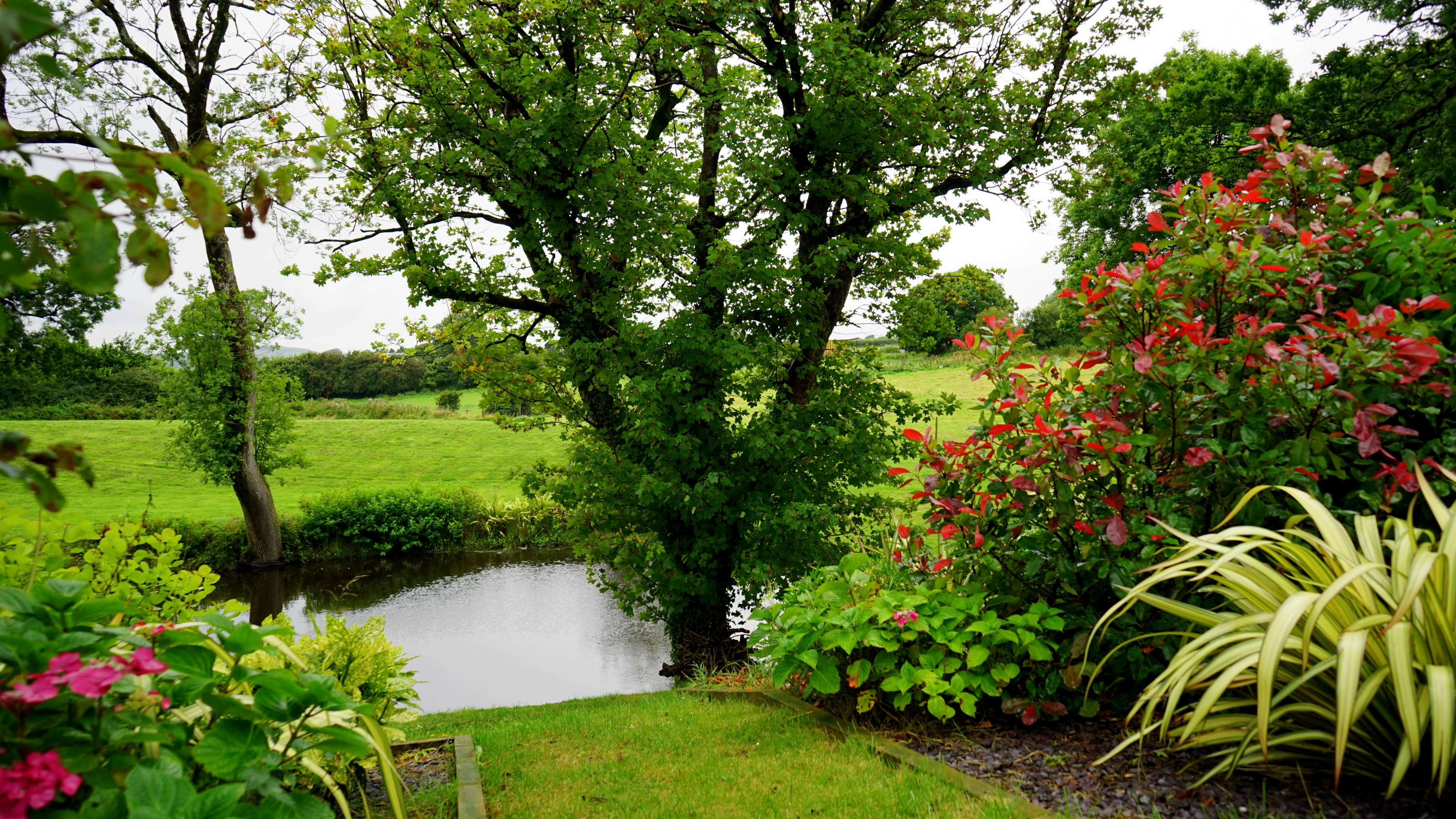 528290 bloom blooming country countryside daylight england 3840x2161