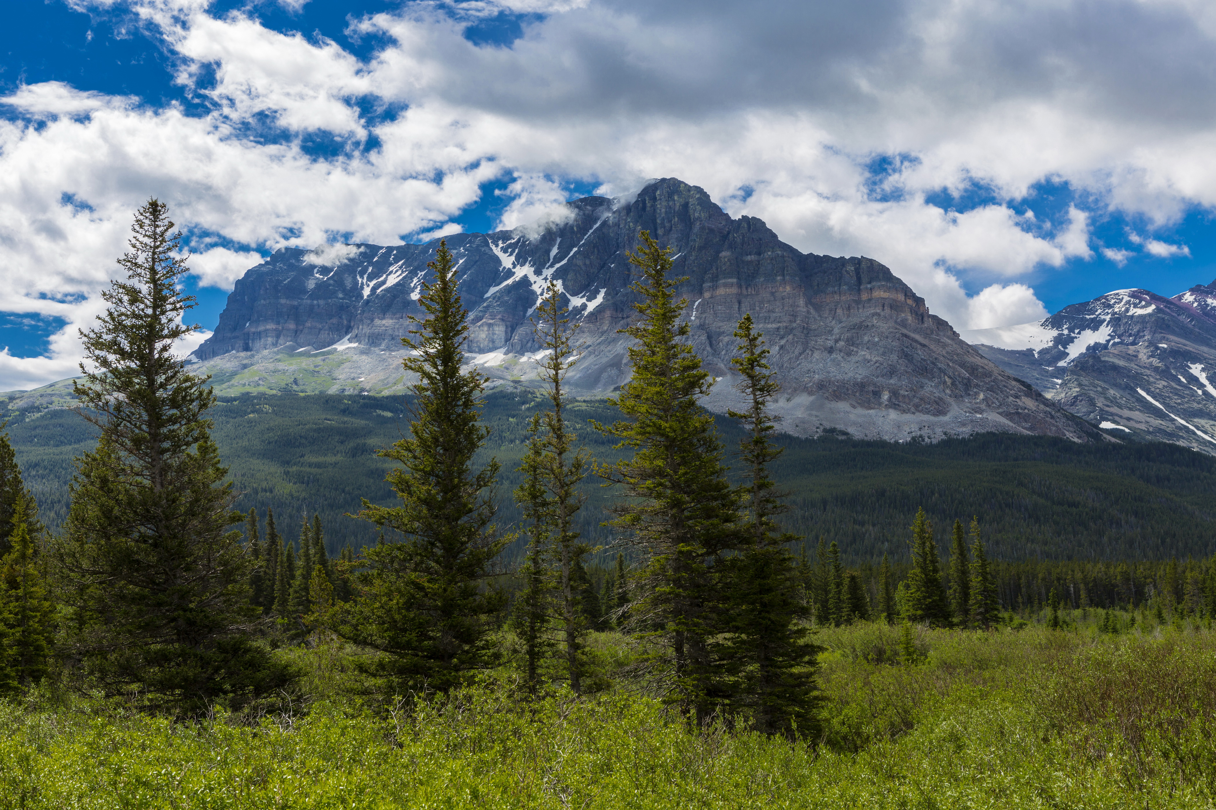 glacier, montana, mountains, forest, clouds, bushes, trees wallpapers ...