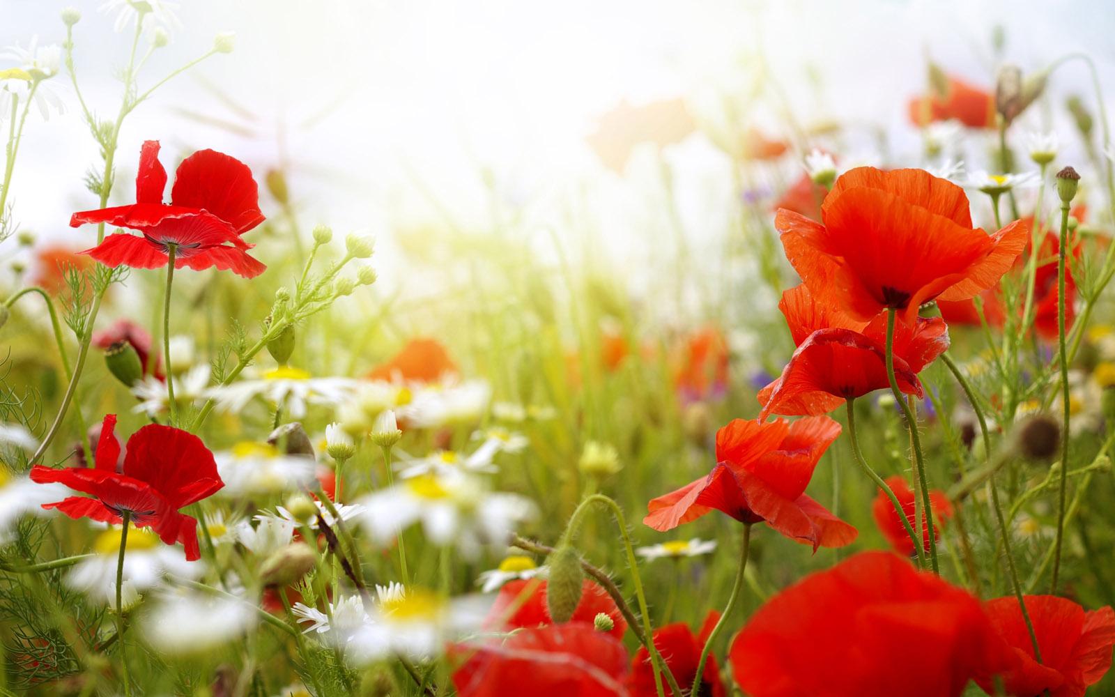 Spring Flowers Wallpaper Hd Desktop Widescreen For Mobile Tumblr 1600x1000