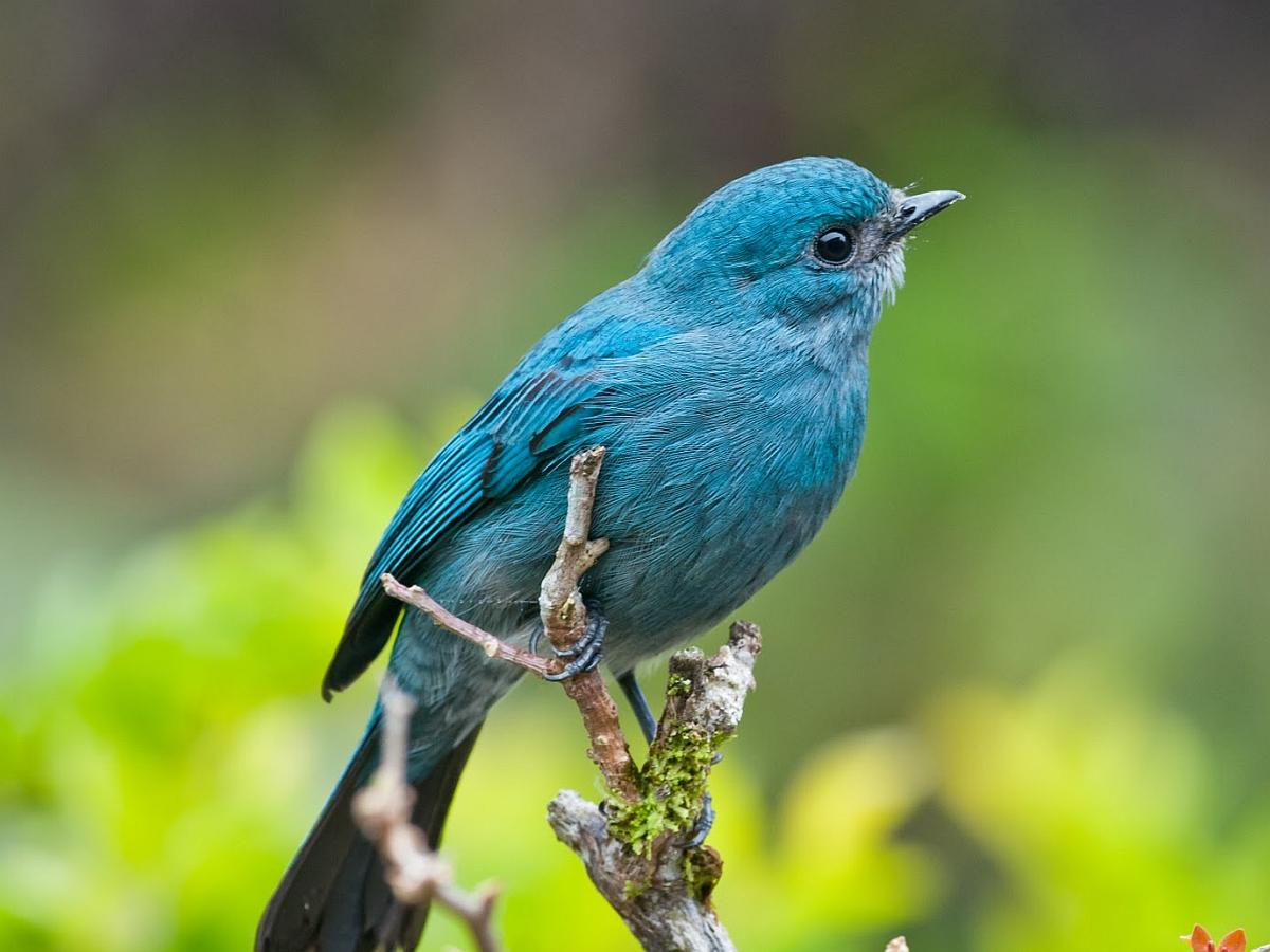 BLUE BIRD WALLPAPER   52043   HD Wallpapers   [WallpapersInHQcom] 1200x900