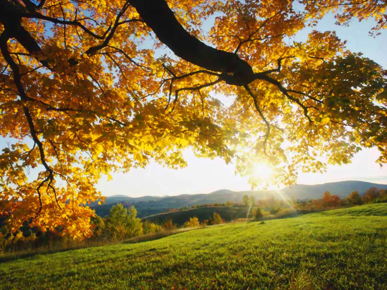 autumn wallpapers for desktop autumn wallpaper widescreen autumn 1280x960