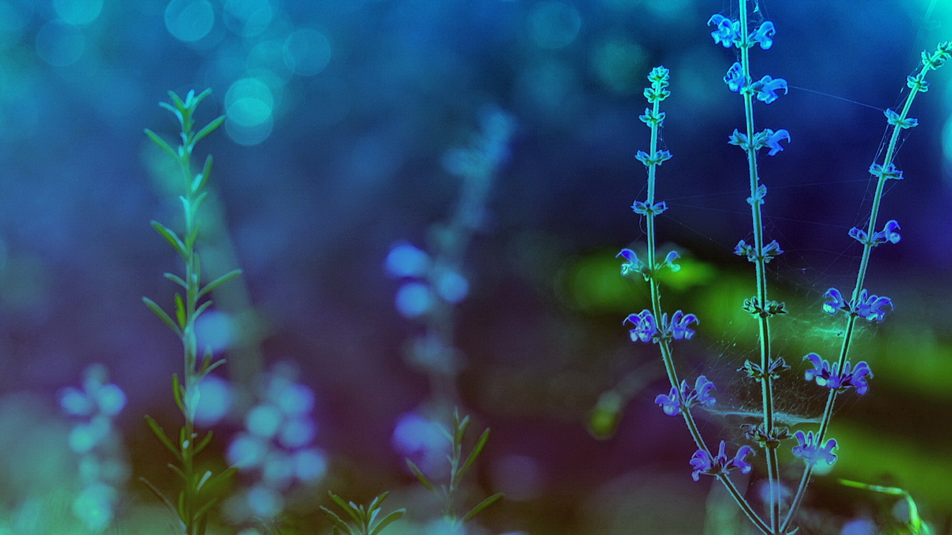 Best HD Spring Flower Theme Wallpapers Blue Background 1920x1080