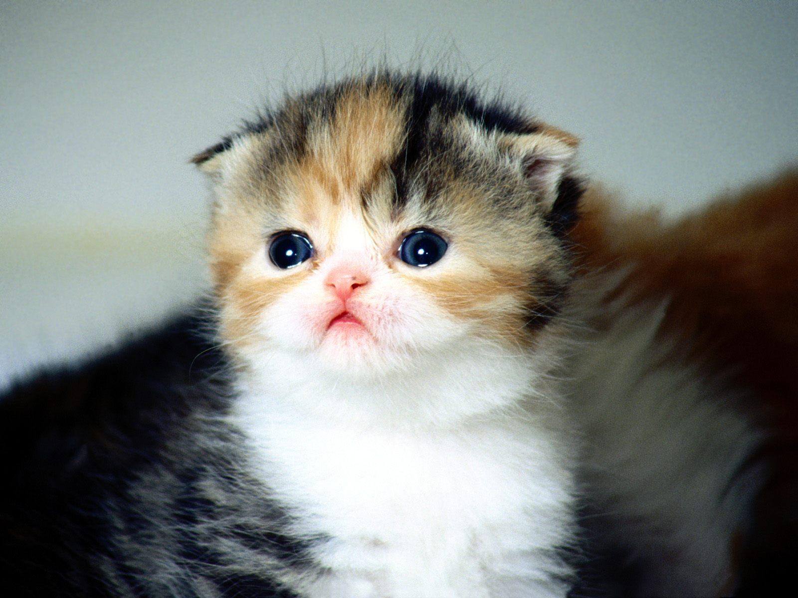 Hd wallpaper cat - Cats Are Little Sweet Cute Backgorund Wallpaper Full Hd Wallpapers
