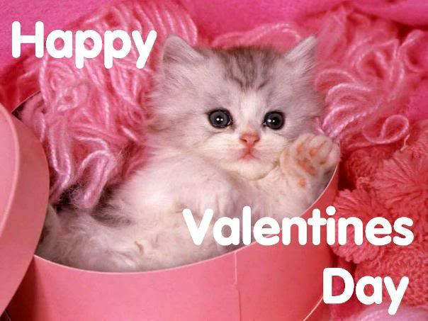 Show Your Pet Some Love This Valentines Day Veterinary Secrets 604x453