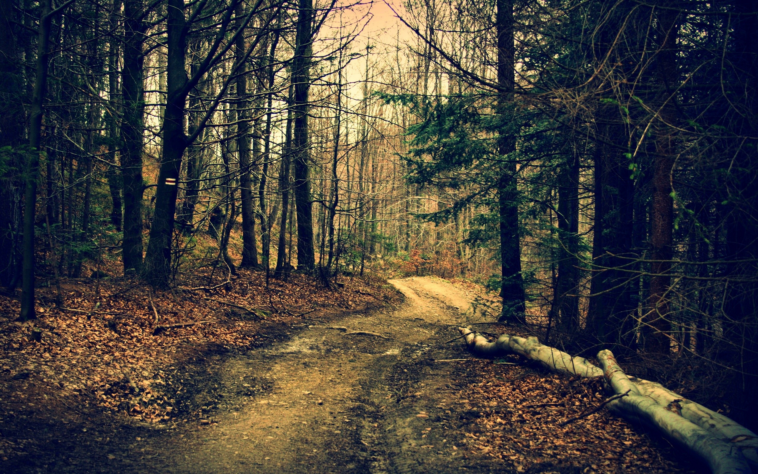 The road in the woods in autumn wallpapers and images   wallpapers 2560x1600