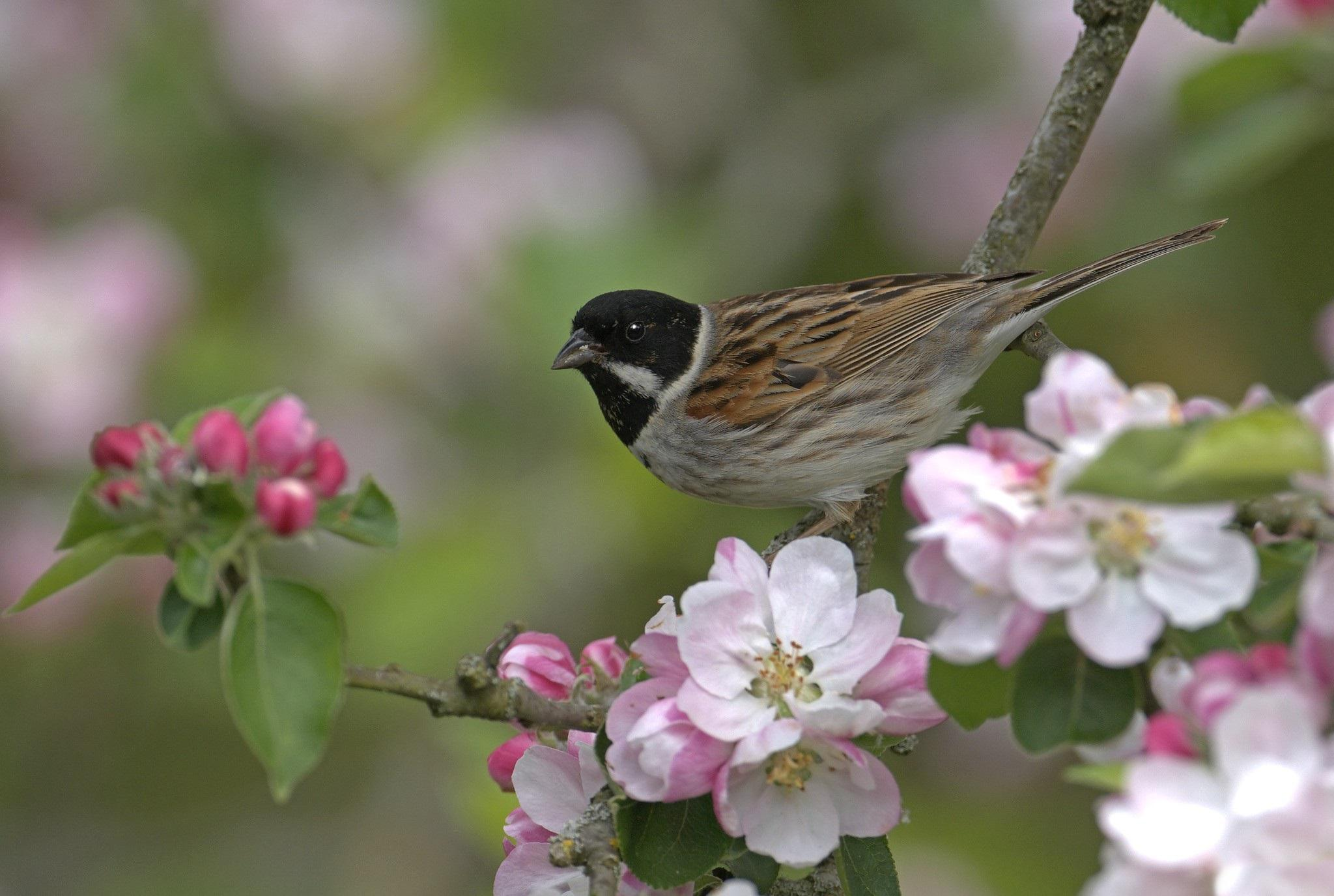 bird and flowers   134213   High Quality and Resolution Wallpapers 2048x1375