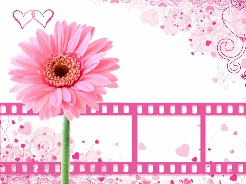 Pics Photos   Pretty Pink Flowers Backgrounds For Computer 1024x768
