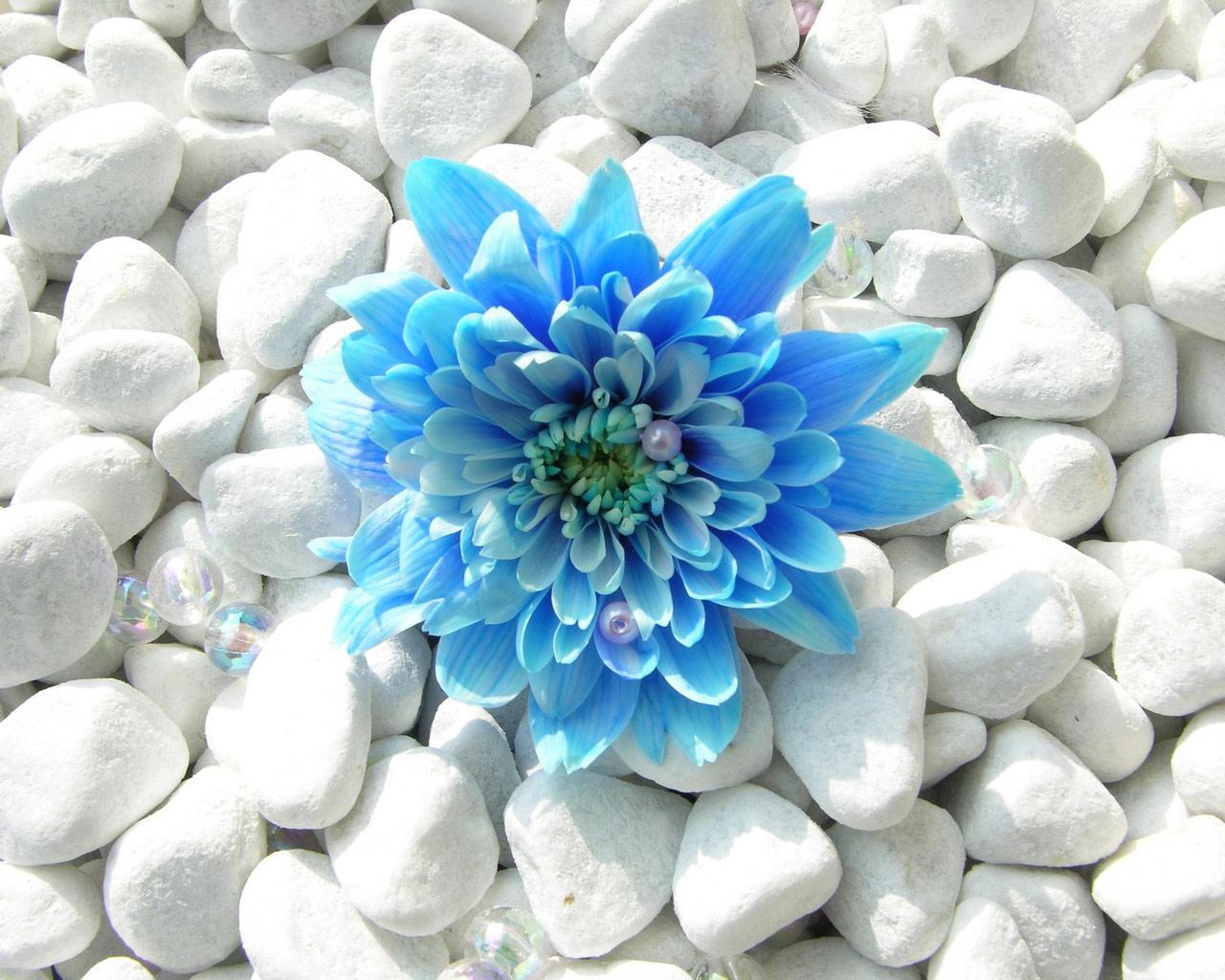 Wallpapers Of Blue Flowers Blue Flower 1280x1024