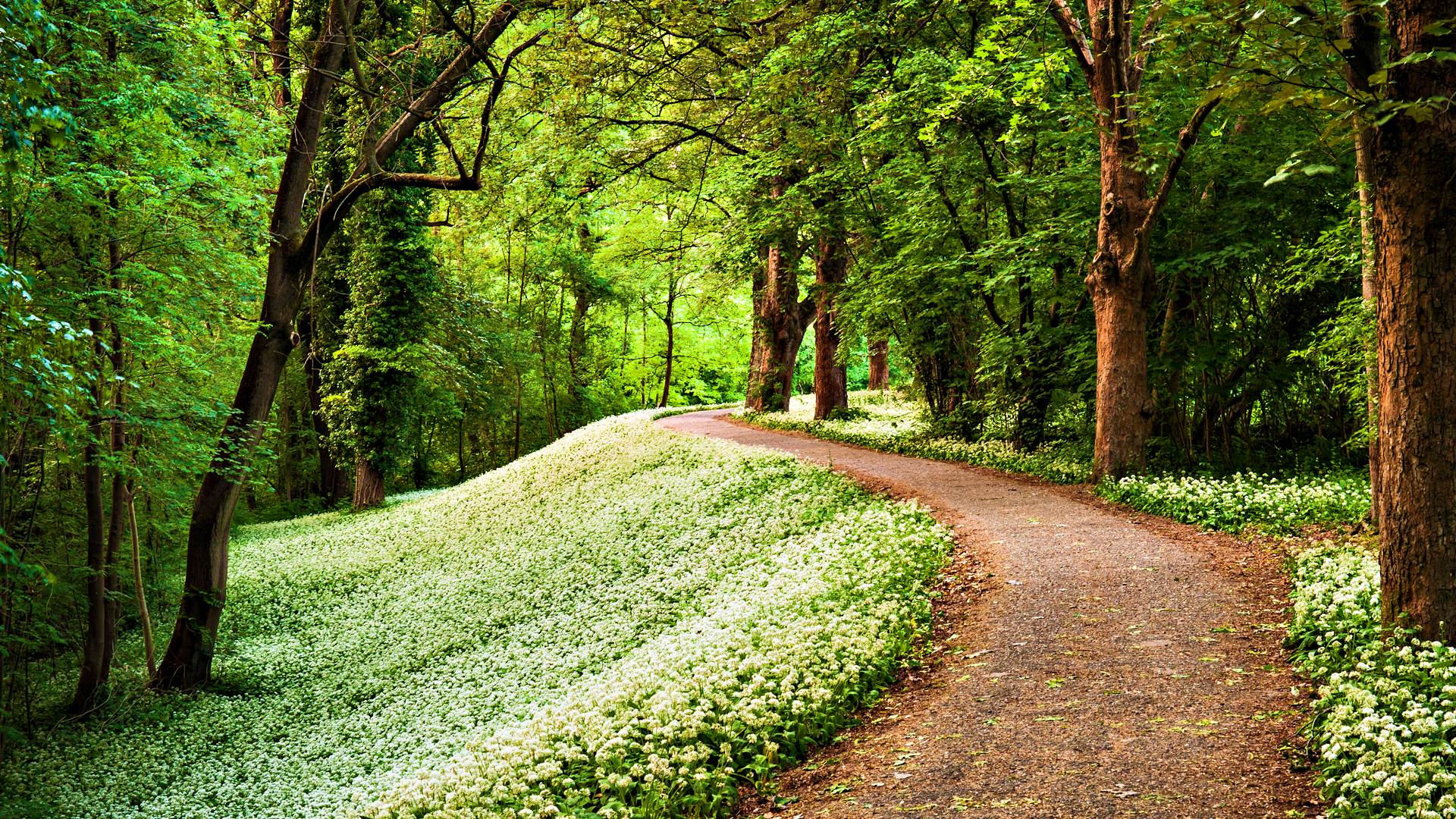 Green Path In Forest HD Wallpaper Search more Nature Forests high 1920x1080