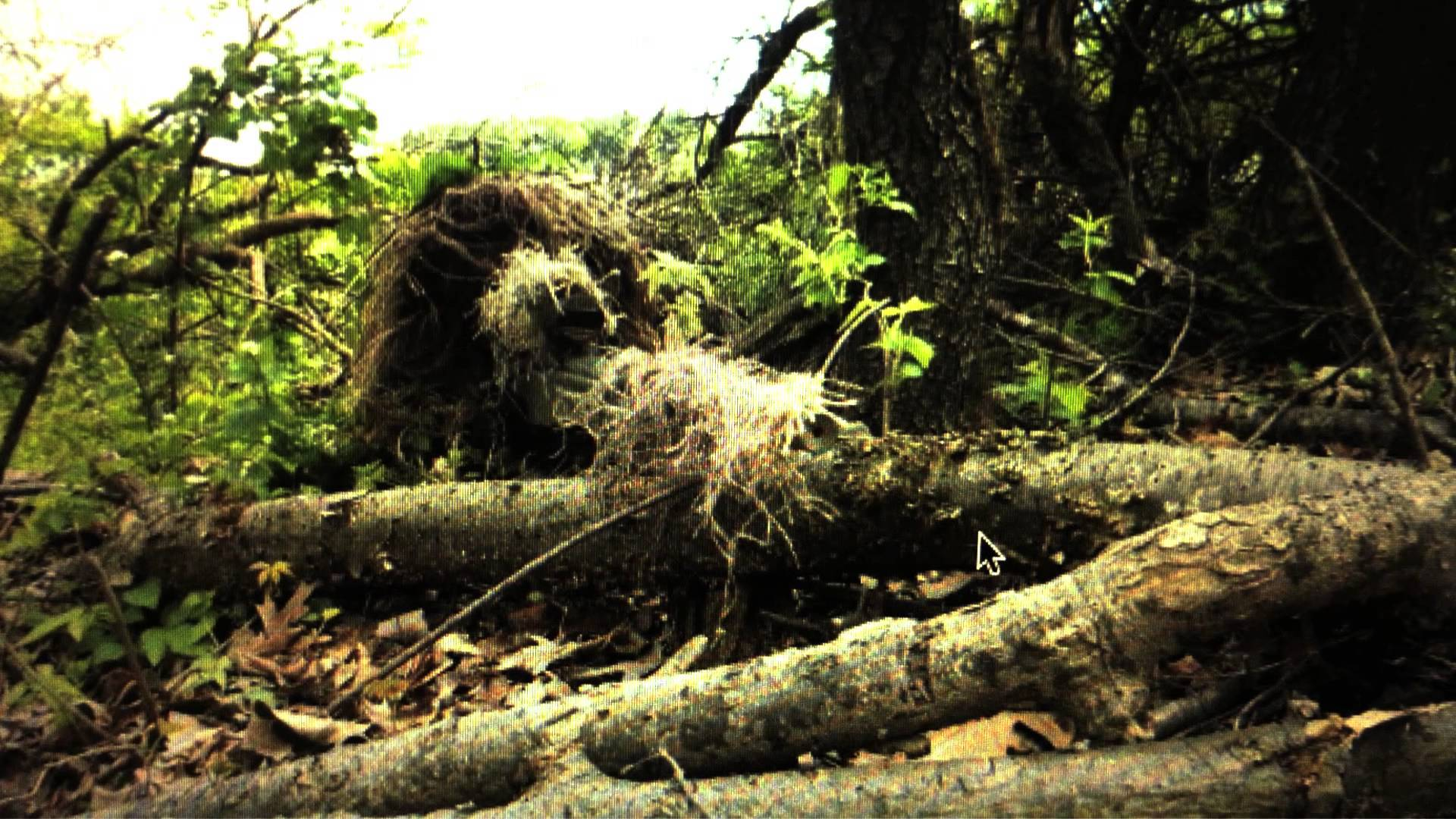 Displaying 19 Images For Marine Ghillie Suit Wallpaper 1920x1080