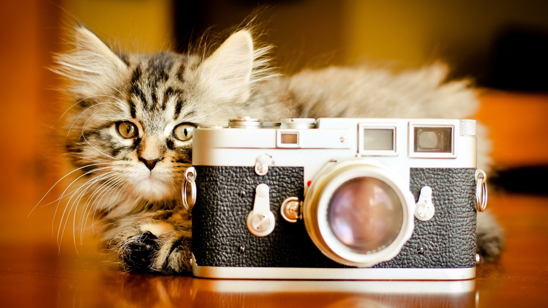 Funny Cat And Camera HD wallpapers   Funny Cat And Camera 1920x1080