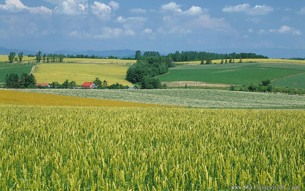 farm scenery Landscape Wallpapers   download wallpapers 1280x800