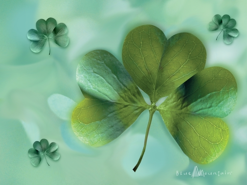 Pink Shamrock Wallpaper Http 2 bp blog 1024x768