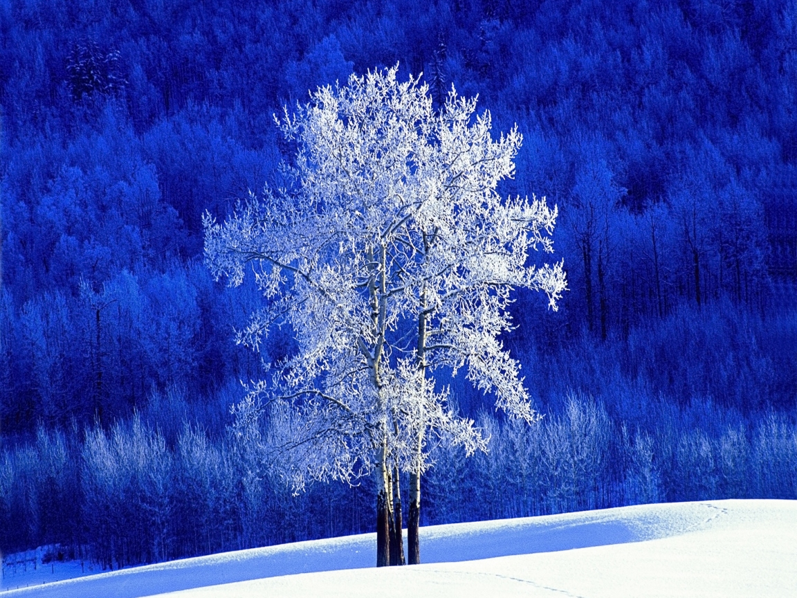 aspen tree wallpaper for home bing images
