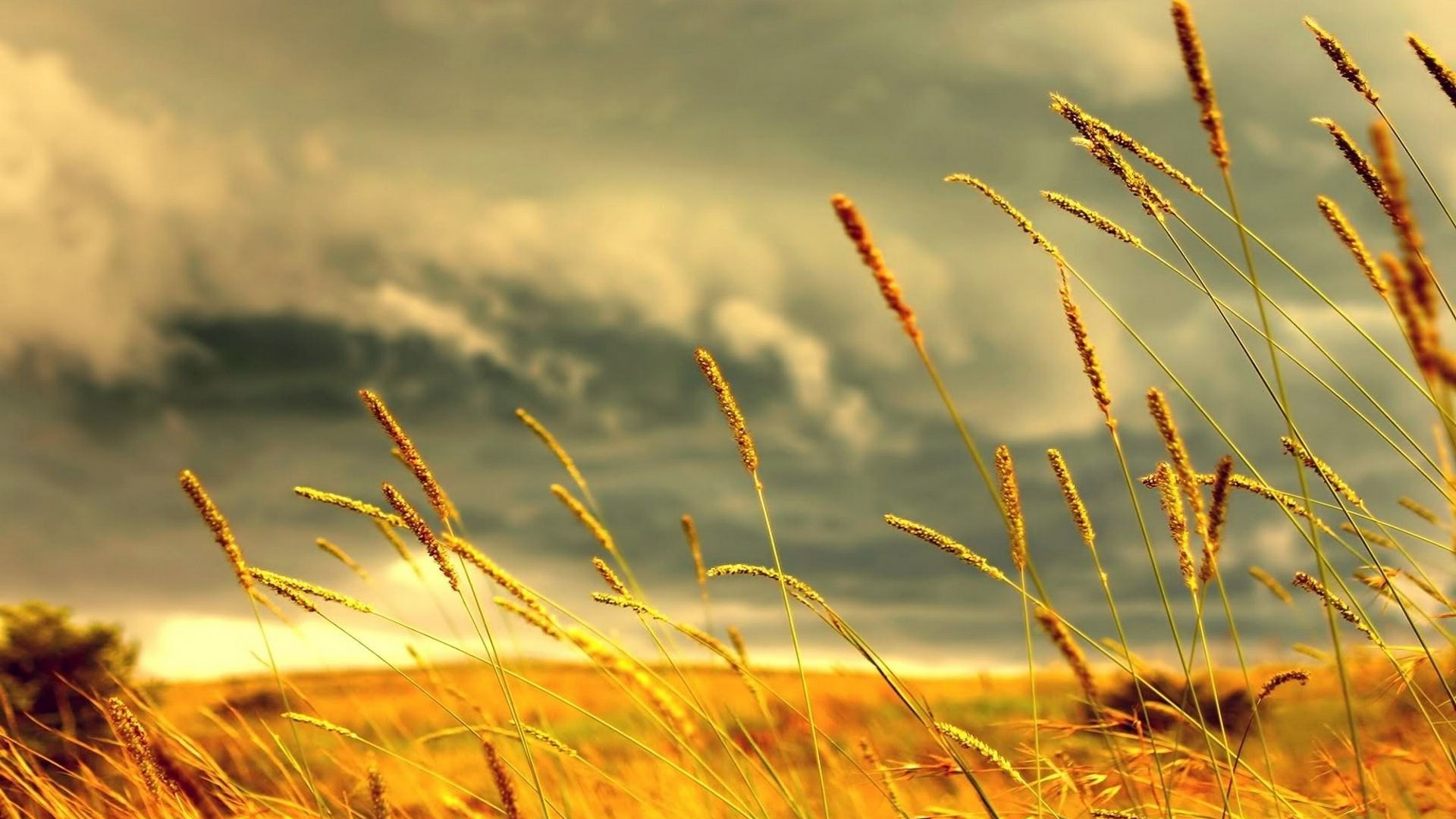 landscapes clouds fields nature rye land skyscapes Wallpapers 1920x1080