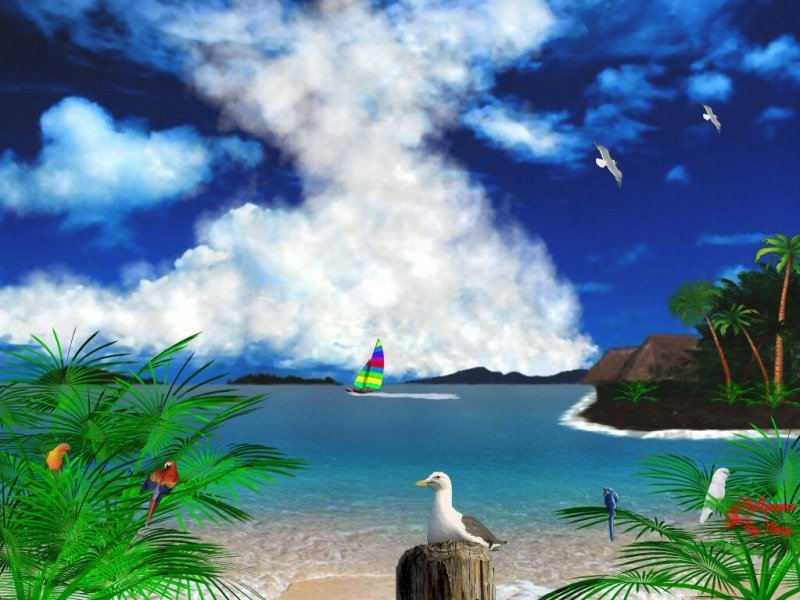 Tropical Background Related Keywords Suggestions   Tropical 800x600
