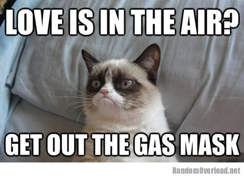 grumpy cat pictures with captions Valentines Day is coming 500x372