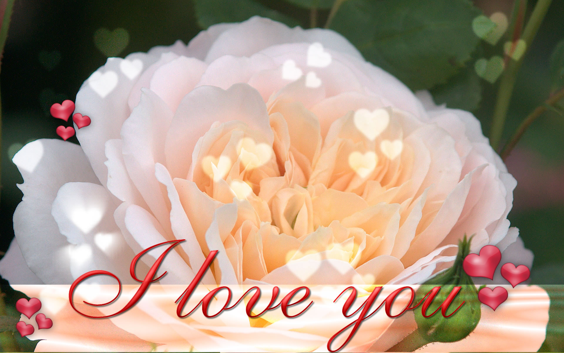 Free Download Or Samsung Galaxy Just Press And Select As Wallpaper Or Save 1920x1201 For Your Desktop Mobile Tablet Explore 74 I Love You Background Valentine Wallpapers For Desktop