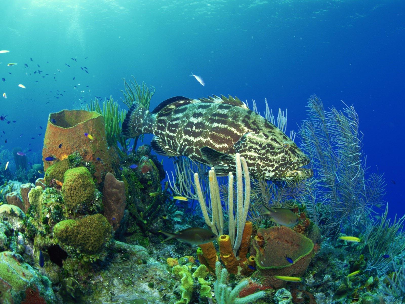 underwater life Wallpaper High Quality WallpapersWallpaper Desktop 1600x1200