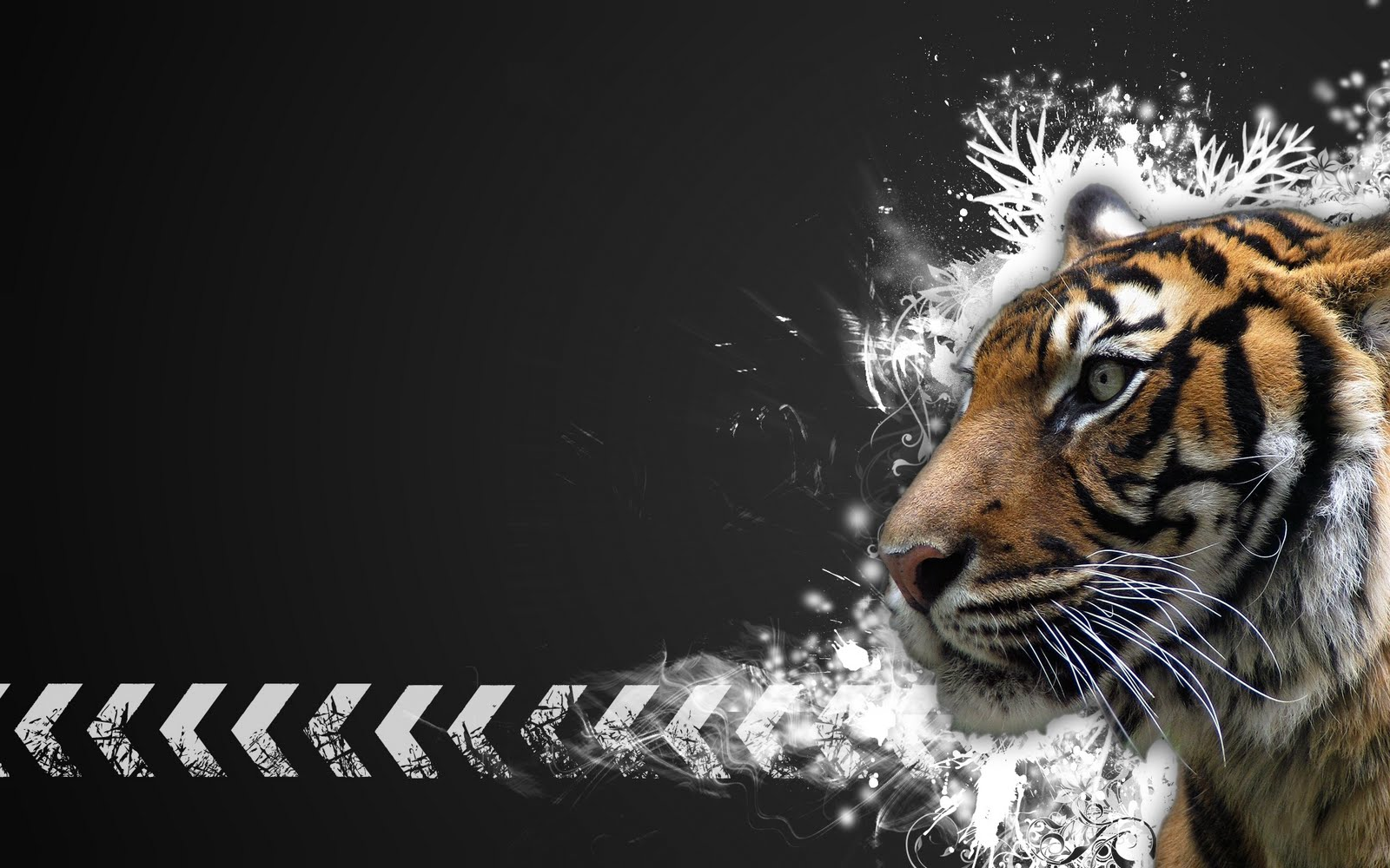 tiger wallpapers hd Tiger Vector Widescreen HD Wallpaperjpg 1600x1000