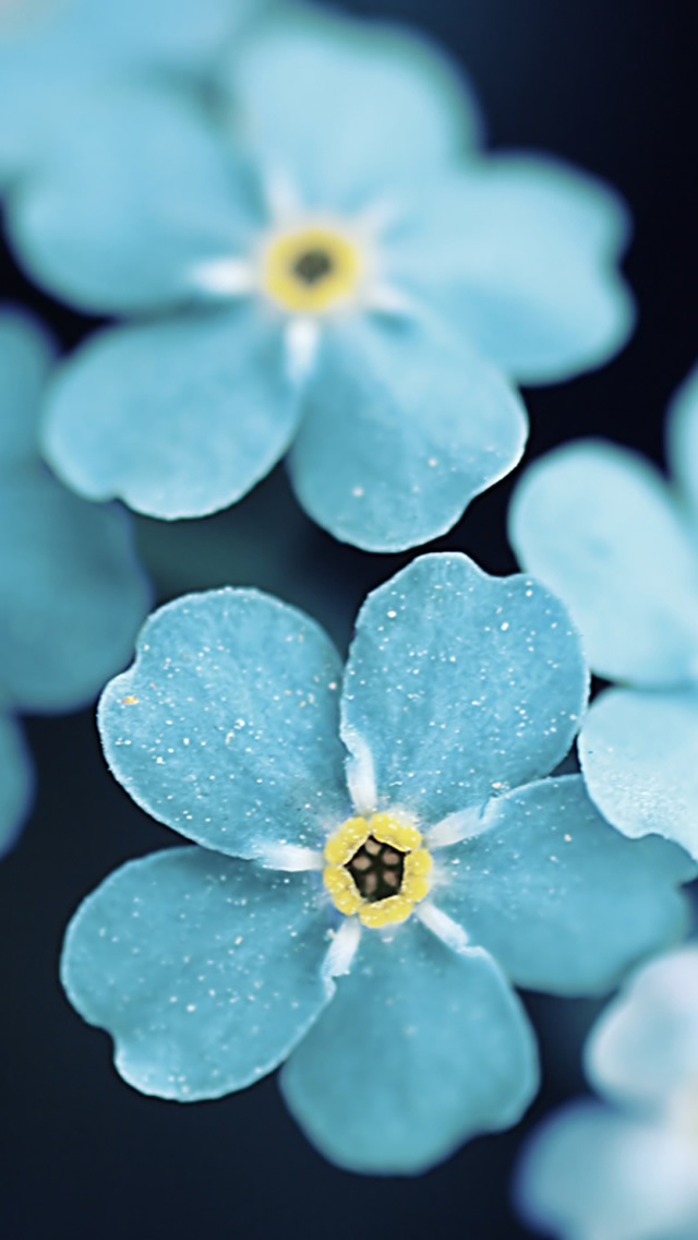 iPhone Wallpapers of the Week The 20 Beautiful Flowers 640x1136