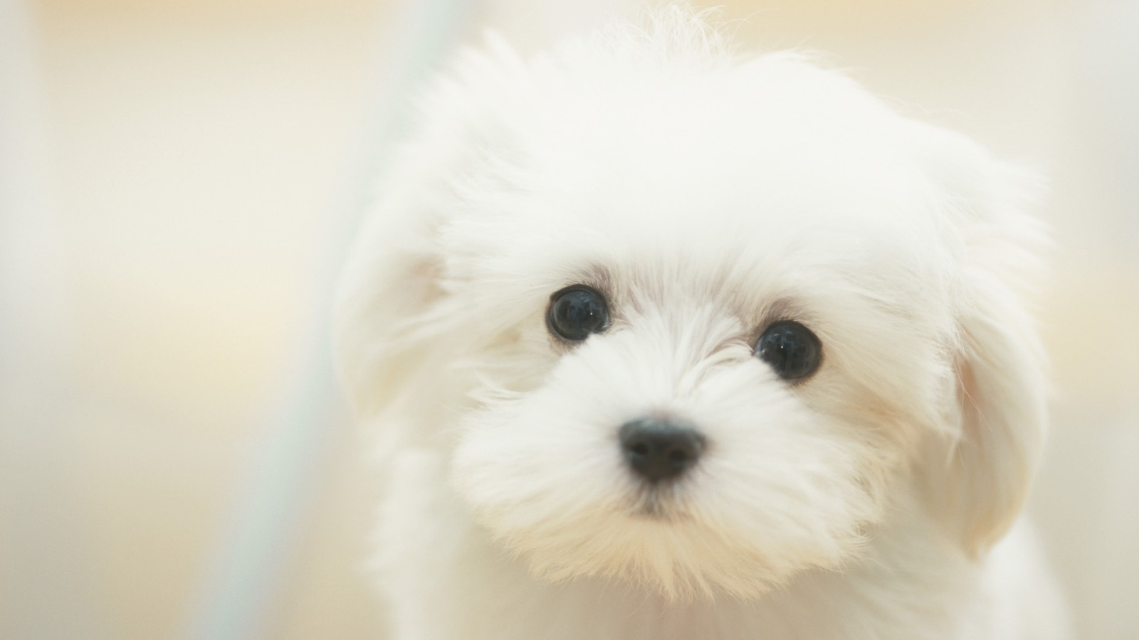 Cute Puppy Wallpaper Wallpapers Gallery 1600x900
