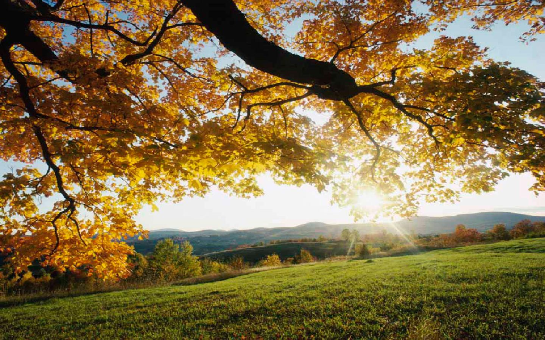 Autumn Leaves Nature Landscape Desktop Hd Wallpaper   1440x900 iWallHD 1440x900