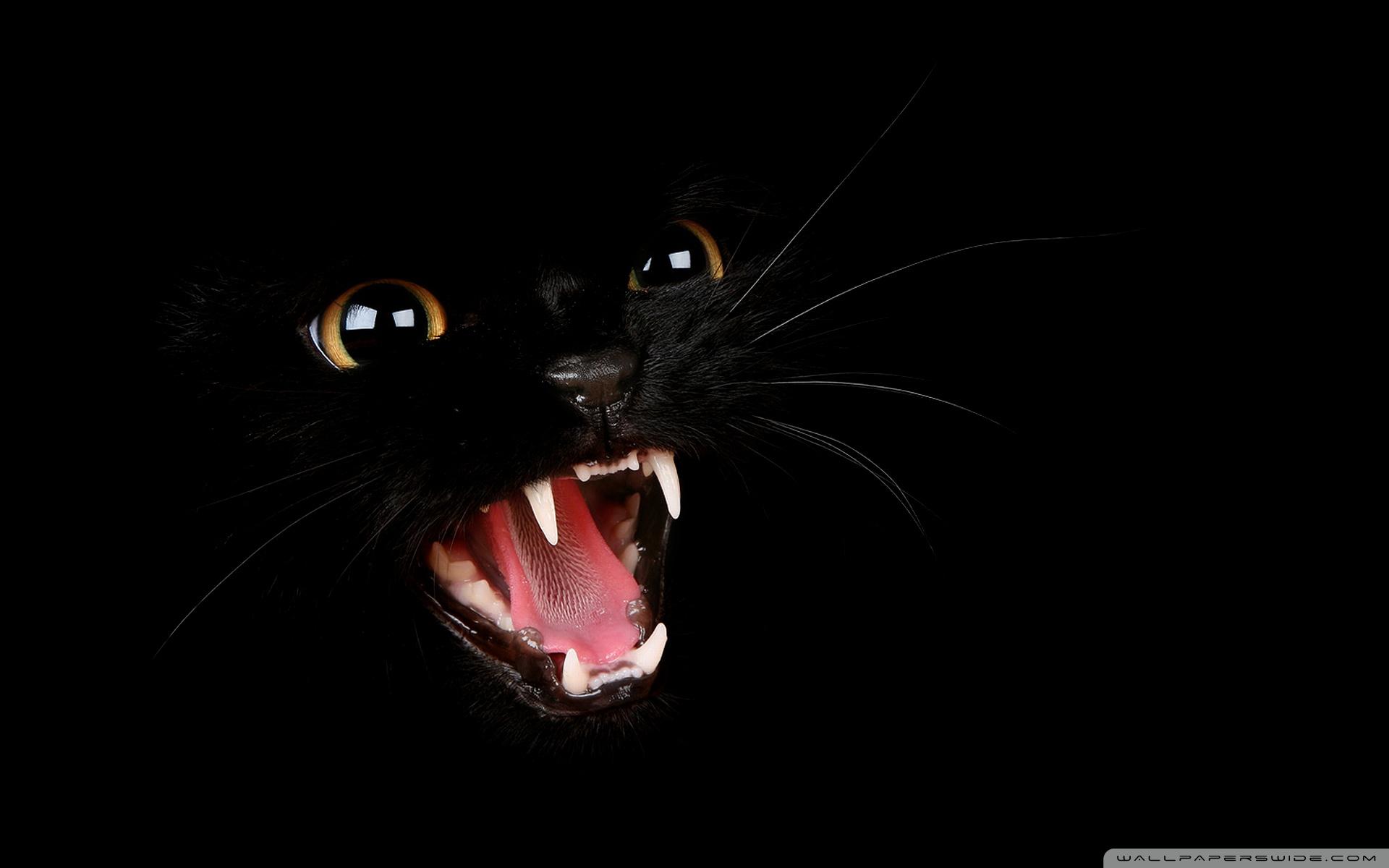 обои на рабочий стол черные кошки на черном фоне № 154854 загрузить
