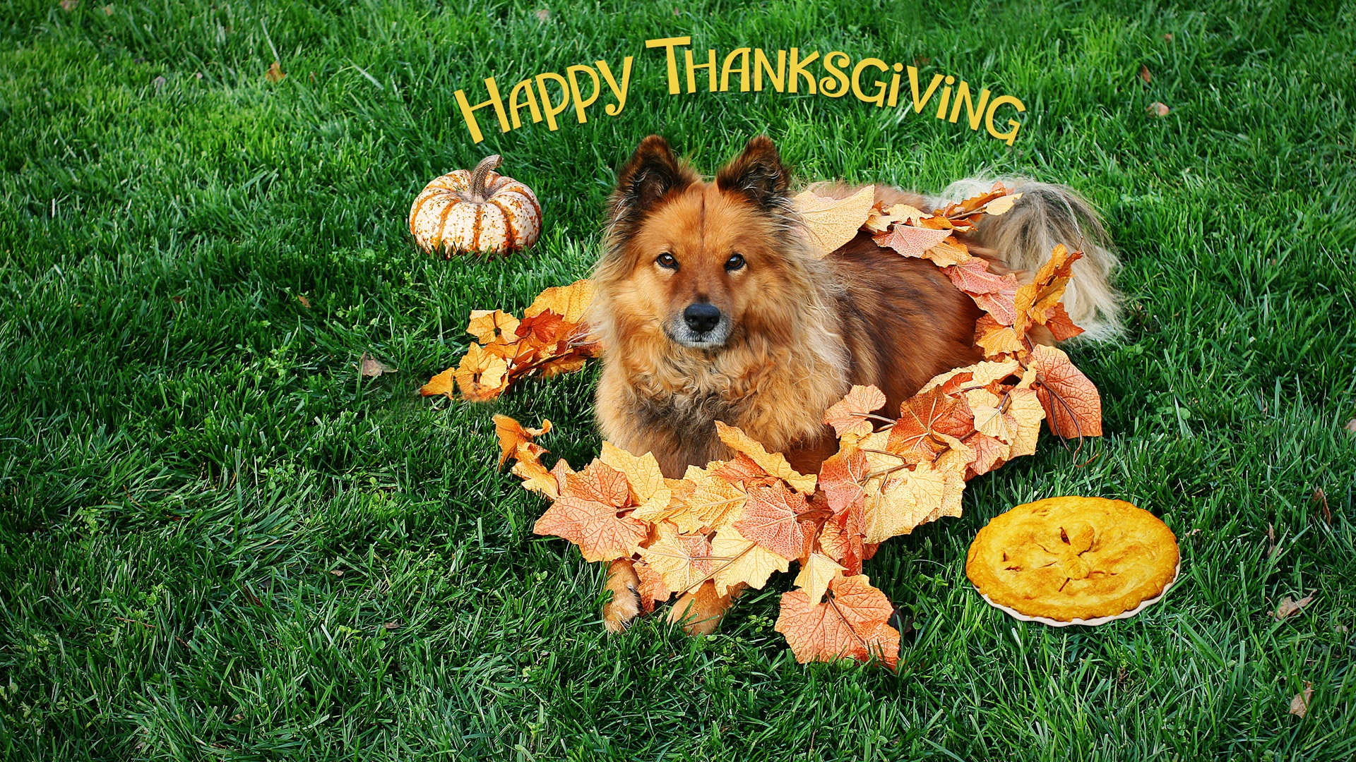 Image Go back to Thanksgiving Desktop wallpapers backgrounds 1920x1080