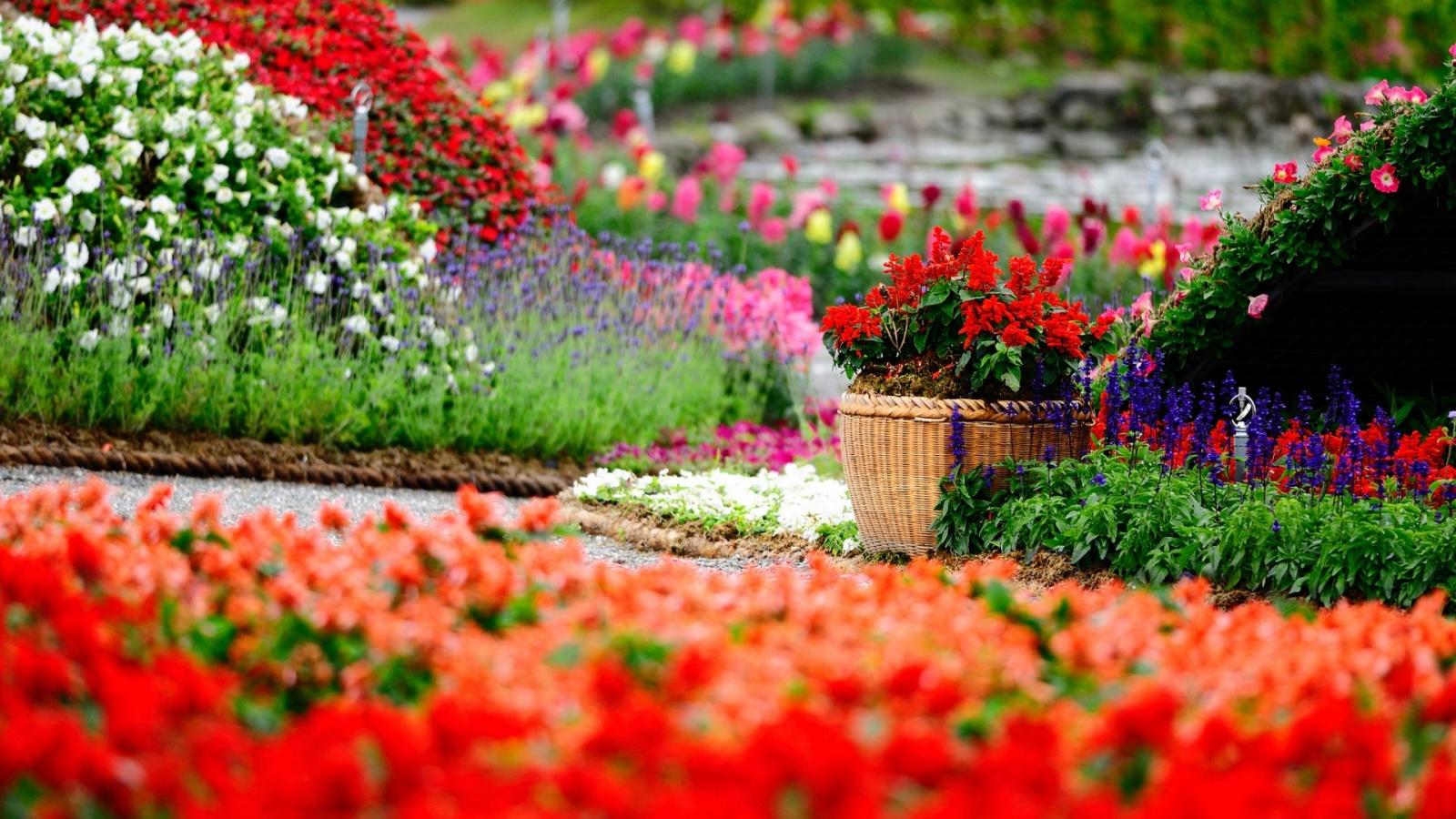 Amazing Flower Garden Wallpapers   1600x900   557108 1600x900