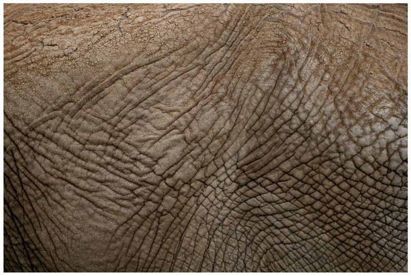 Elephant Skin by CriticalPhotography 800x538